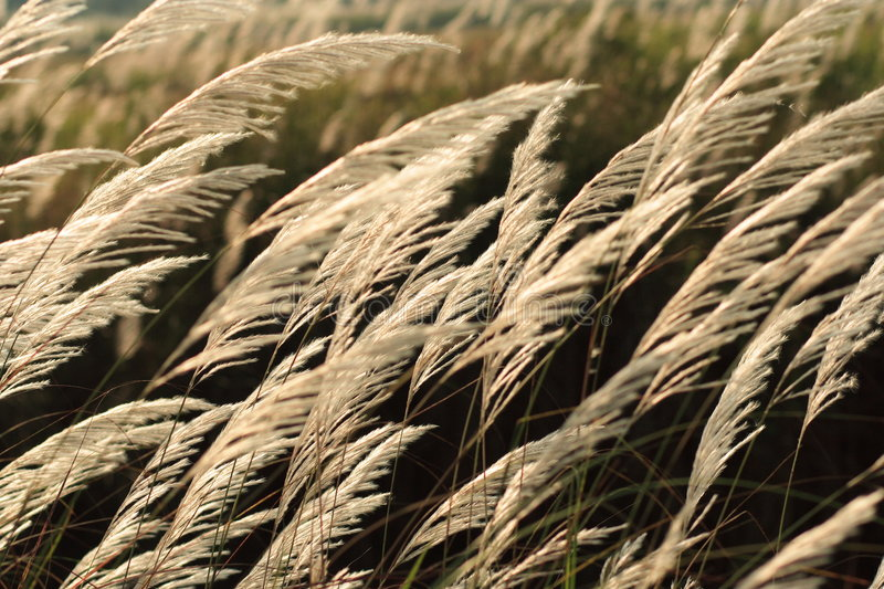 Grass in the morning royalty free stock photos