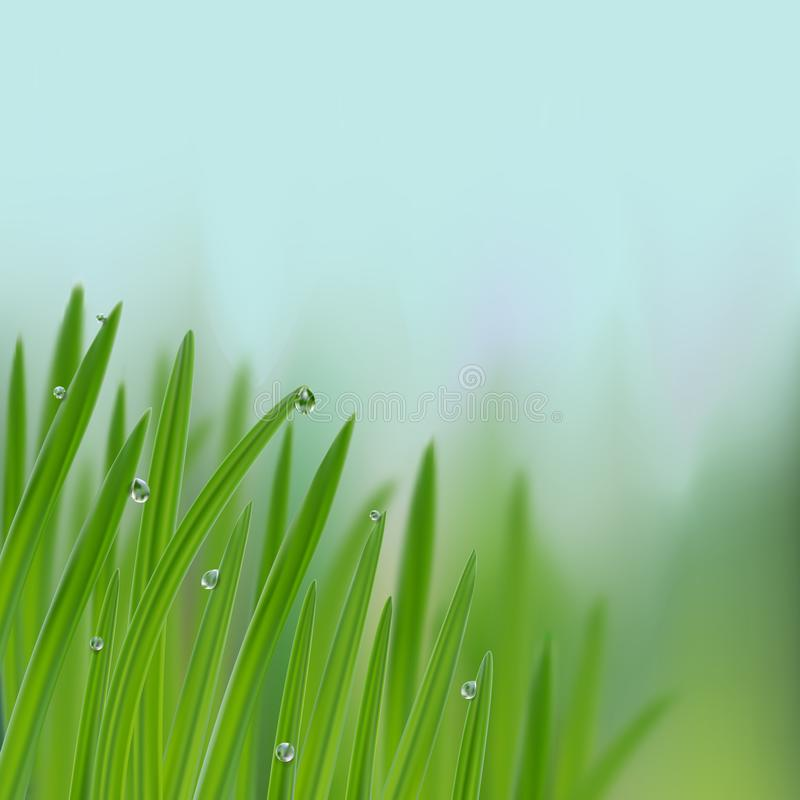 Grass in droplets of water background. A nature fresh composition. Grass with morning dew background. Grass s in droplets of water nature composition with vector illustration