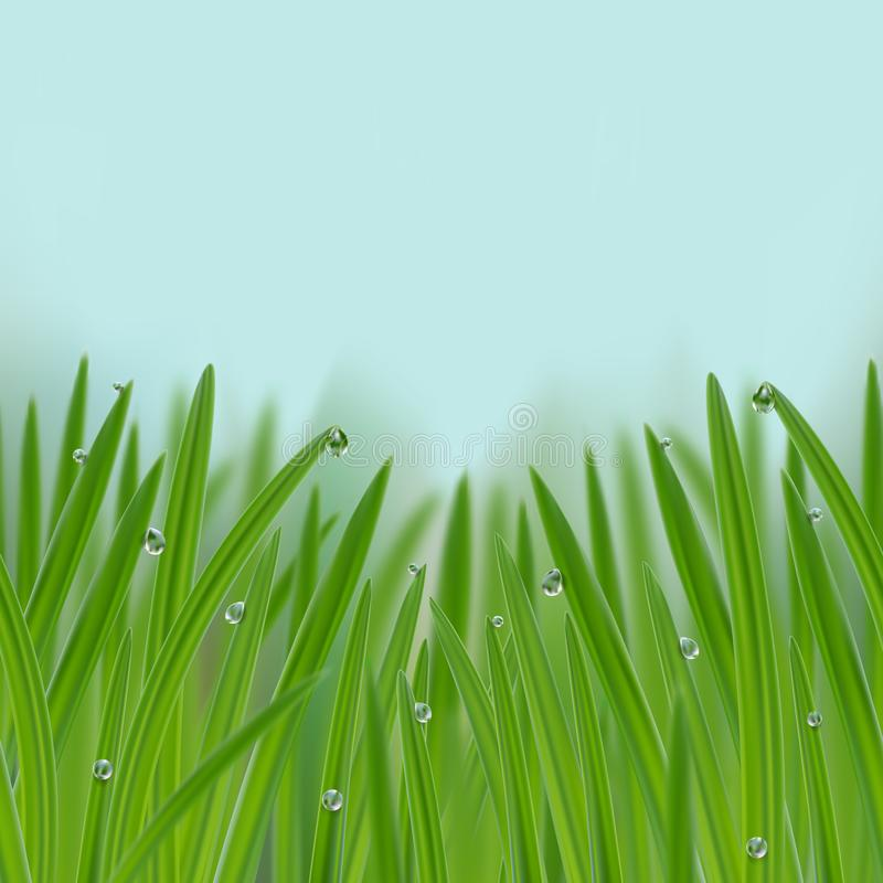Grass in droplets of water seamless border. Grass with morning dew seamless border. Grass s in droplets of water nature repeat background with effects of soft royalty free illustration
