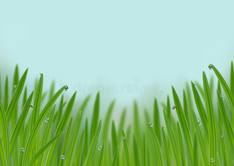 Grass in droplets of water seamless border. Grass with morning dew seamless border. Grass s in droplets of water nature repeat web banner with effects of soft stock illustration
