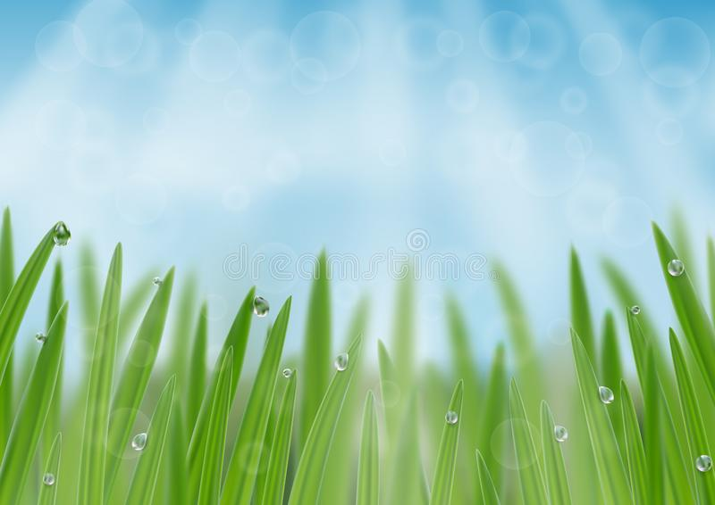Grass in droplets of water background. A nature fresh web banner. Grass with morning dew web banner background. Grass s in droplets of water nature composition vector illustration