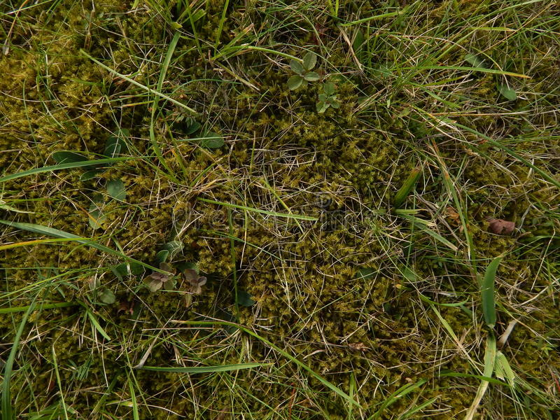 Grass and moss royalty free stock photo