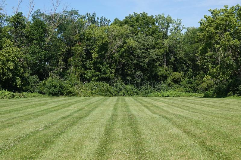 Grass in a Mowed Green Field and Tree Line. Lines of a mowed, green, grass field are shown, ending at a forest tree line royalty free stock photo