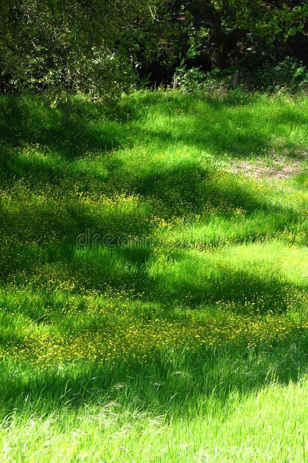 Download Grass and mustard stock photo. Image of freephotos, scene - 85126642