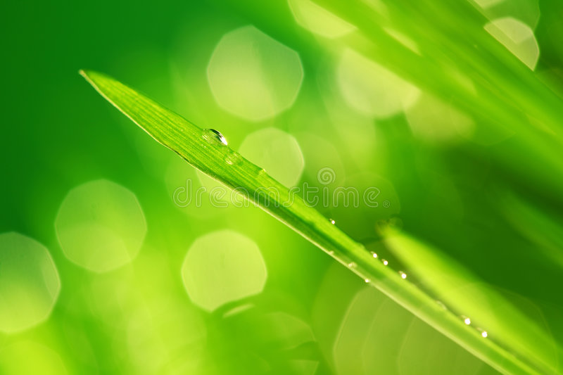 Download Grass nature background stock image. Image of close, blade - 8872503
