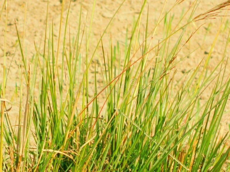 Grass. Nature greentree nice beautiful royalty free stock photography
