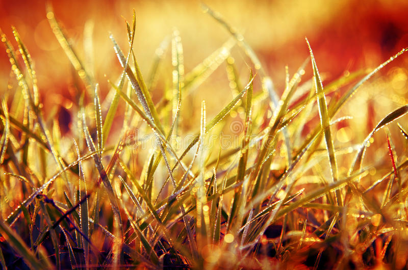 Download Grass With Orange Background Stock Photo - Image: 27692544