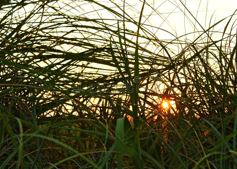 Grass Over Sunset royalty free stock photo