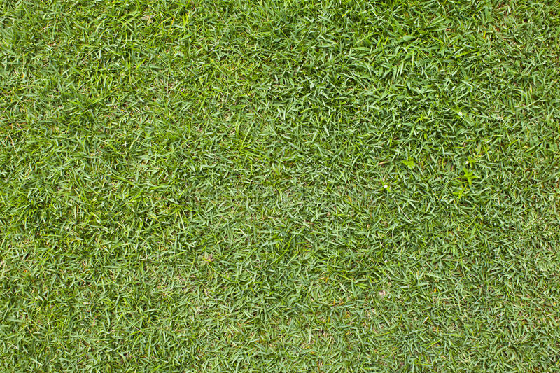 Download A grass pattern. stock image. Image of course, flower - 26938933