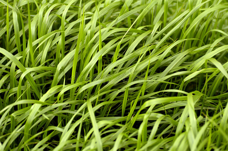 Grass pattern. Texture - background royalty free stock photos