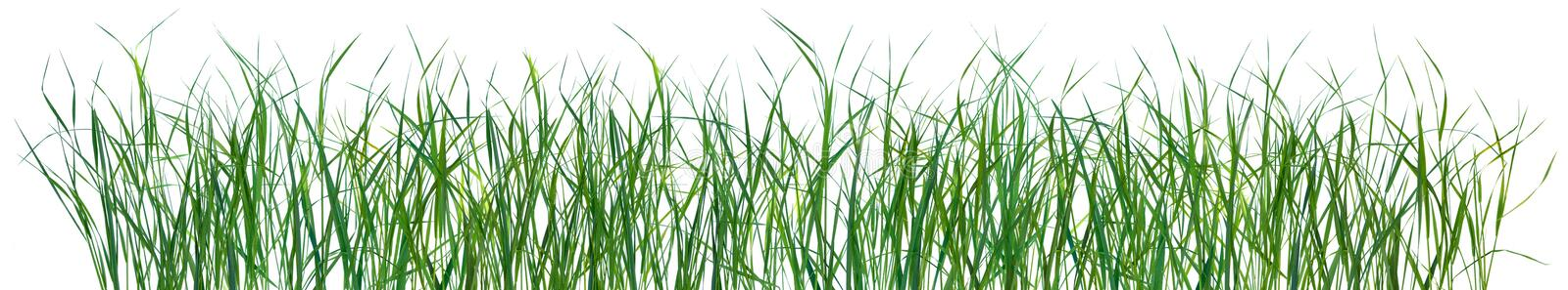 Grass pattern texture isolated royalty free stock photography