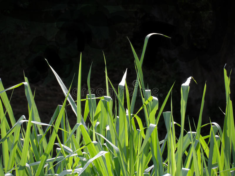 Grass perfil royalty free stock photography
