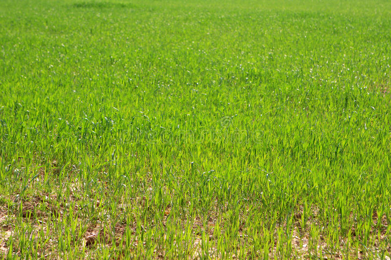Download Grass stock image. Image of outdoor, summer, green, environment - 86039735