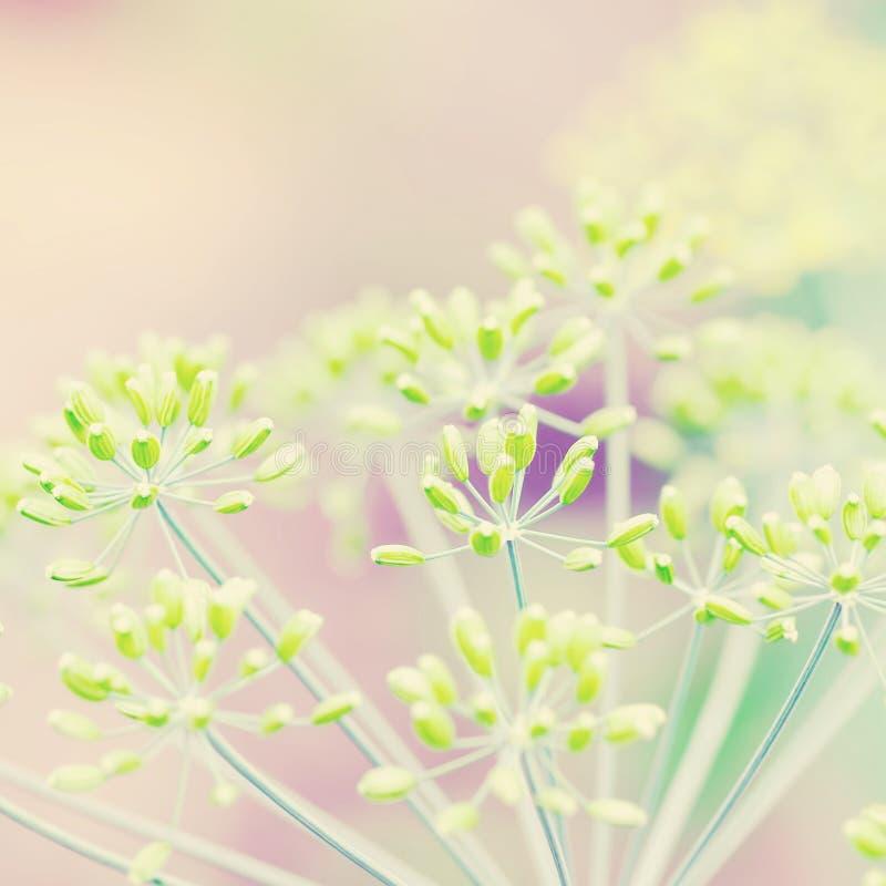 Grass plant on summer morning sunrise royalty free stock image