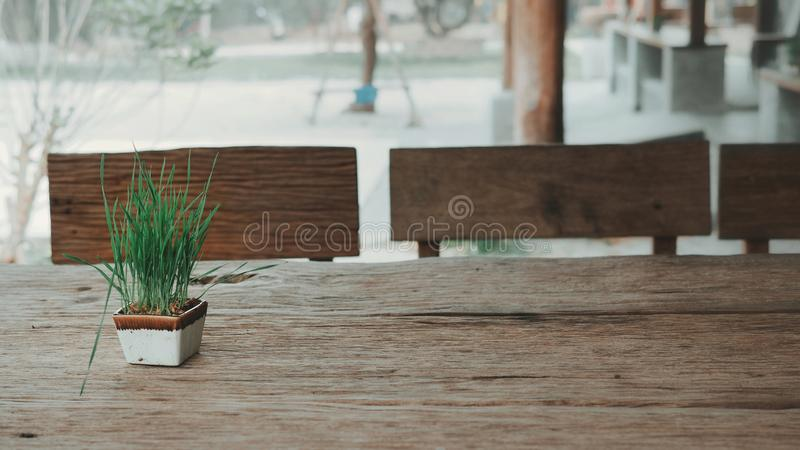 Grass in pot. Grass in pot on the wooden table in park royalty free stock image