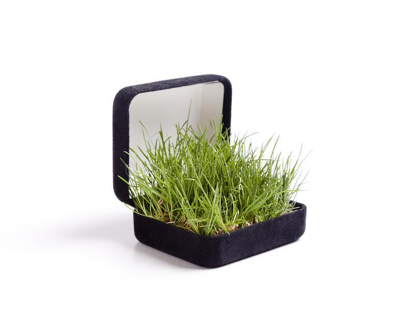 Grass Proposal royalty free stock images