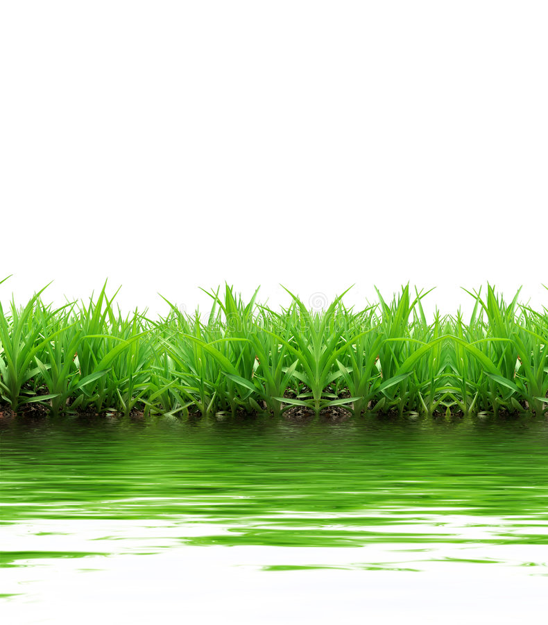 Download Grass reflection stock image. Image of rural, clear, grassland - 7283109