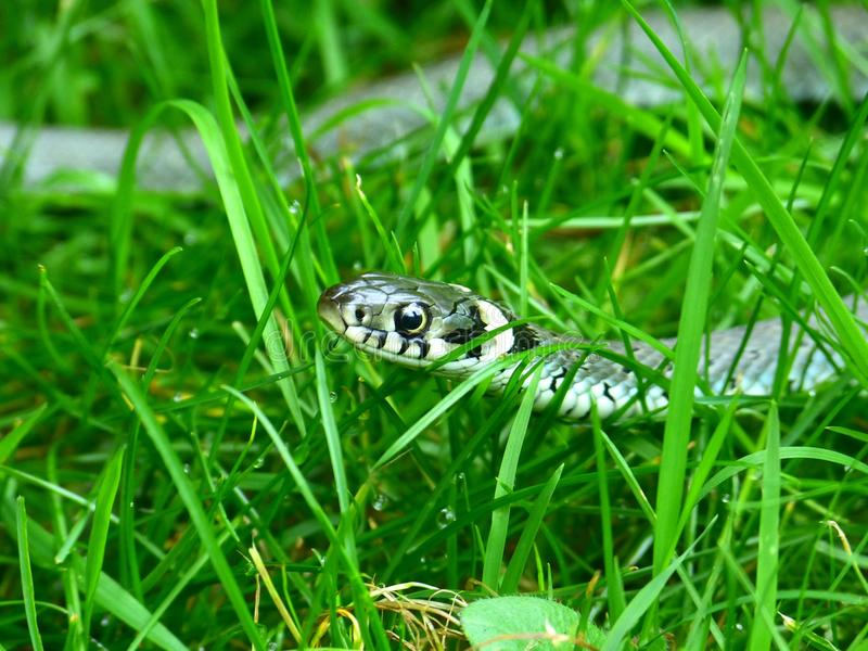 Grass, Reptile, Fauna, Organism royalty free stock images