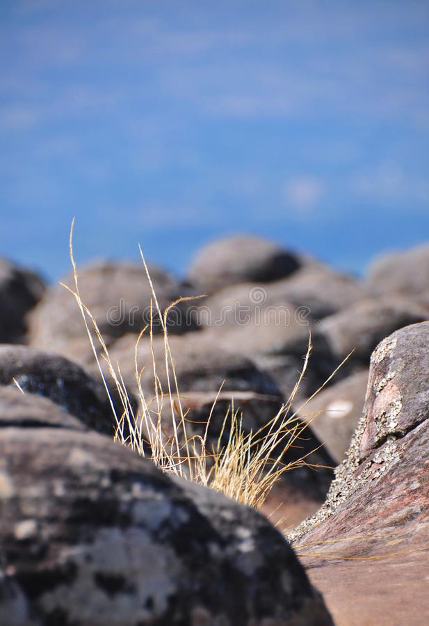 Grass in the rock. The grass that rises between the rock nests on the cliffs withered away royalty free stock photo