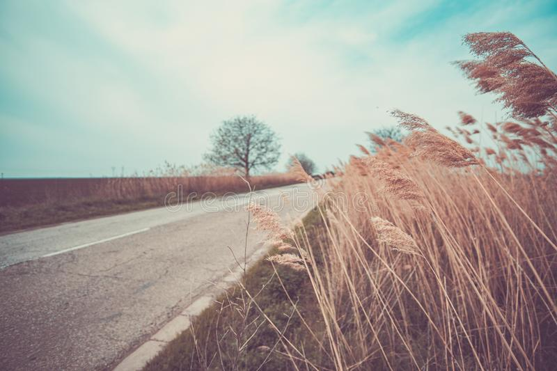 Grass on the road royalty free stock photo
