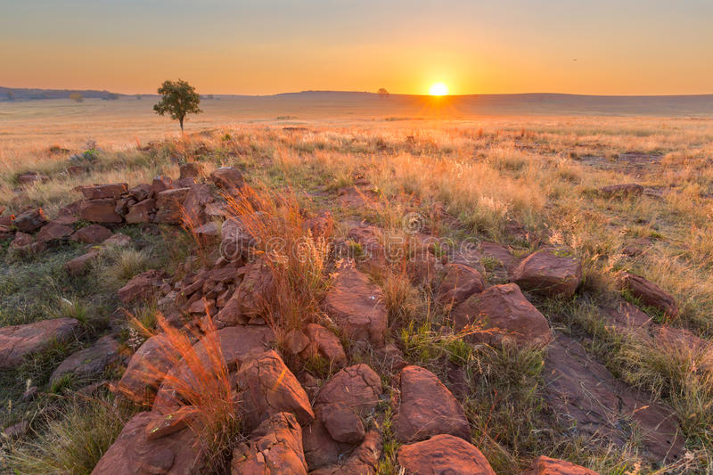 Grass, rocks and a tree at sunset. Ezemvelo NR, South Africa royalty free stock photography