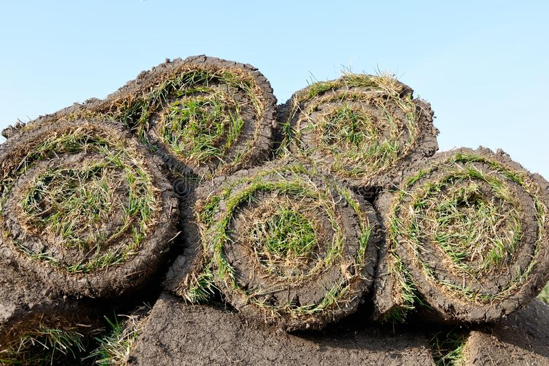 Grass rolls are piled in careless stacks, sod rolls. On the blue sky background royalty free stock images