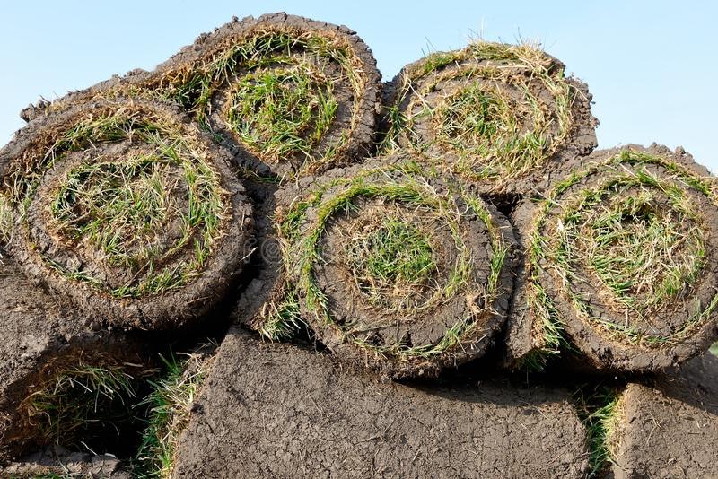 Grass rolls are piled in careless stacks, sod rolls. On the blue sky background stock photos