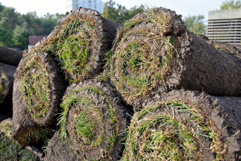 Grass rolls are piled in careless stacks, sod rolls. Close up stock images