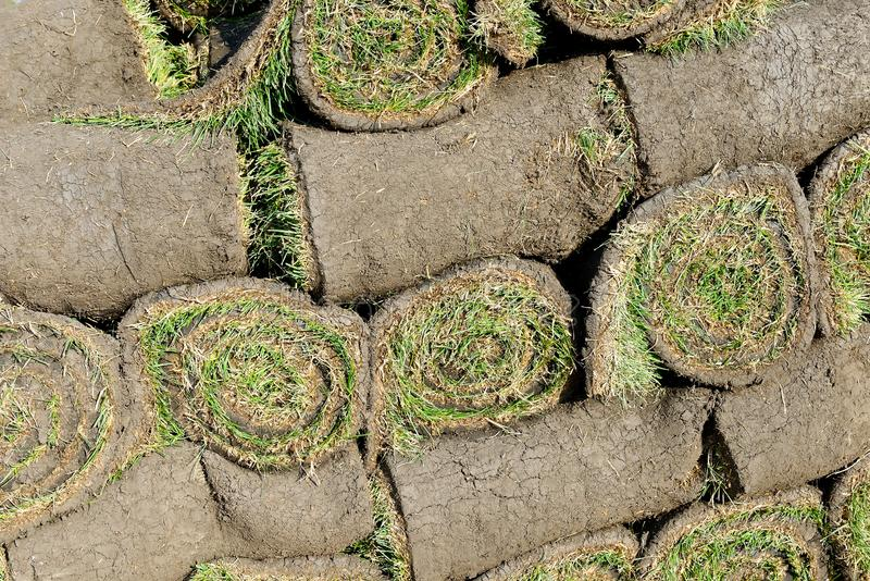 Grass rolls are piled in careless stacks, sod rolls. Close up royalty free stock photo