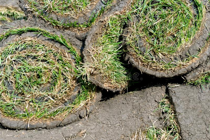 Grass rolls are piled in careless stacks, sod rolls. Close up royalty free stock images