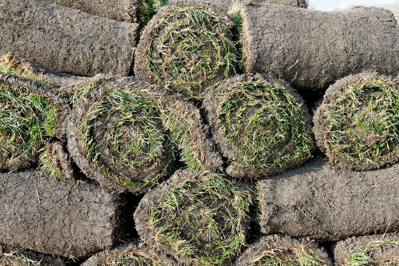 Grass rolls are piled in careless stacks, sod rolls. Close up stock photography