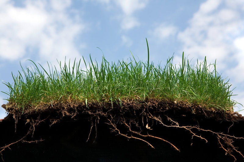 Grass roots royalty free stock image