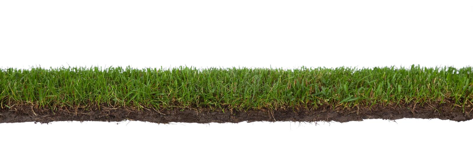 Download Grass with roots and dirt stock photo. Image of background - 11476510