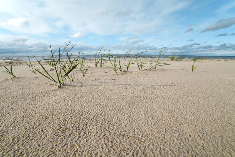 Download Grass and sand. stock photo. Image of summer, coast, sandy - 25148354