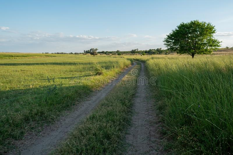 Grass sand dirt road landscape with single lone tree royalty free stock photo