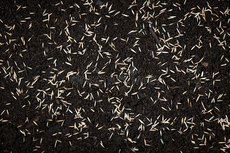 Grass seeds in soil stock photos