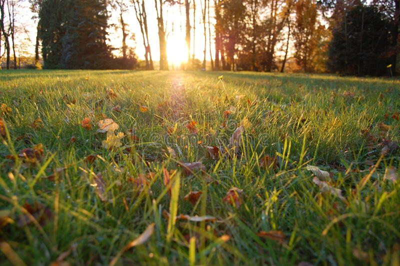 Grass in shadow of Sun stock photo