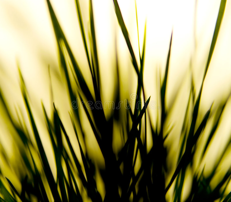 Grass Shapes stock photo