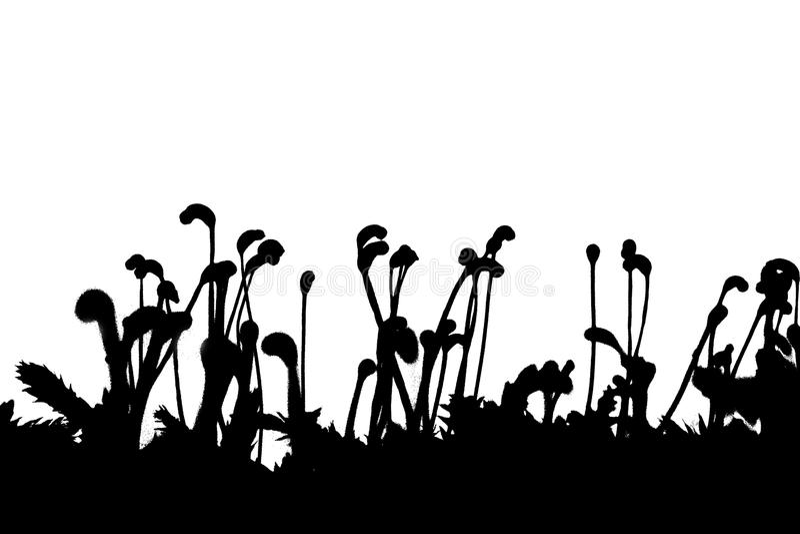 Grass silhouette stock photo