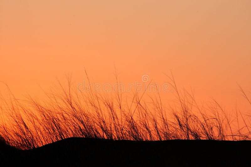Download Grass silhouette stock photo. Image of earth, arid, landscape - 2664782
