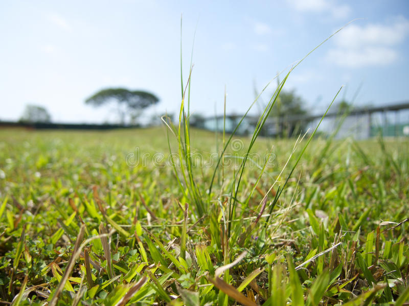 Grass in Singapore royalty free stock photo