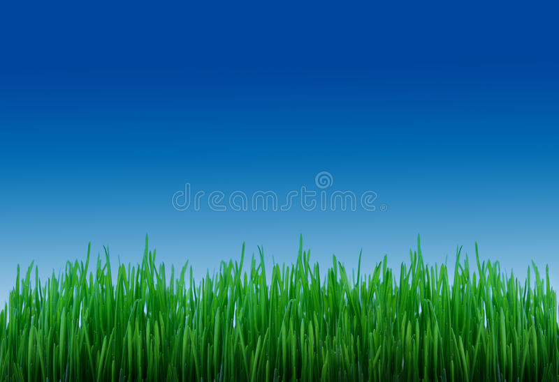 Download Grass and sky stock photo. Image of border, backdrop - 10121502