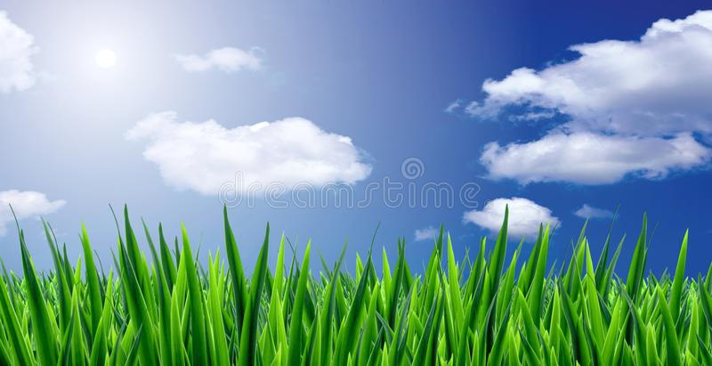 Download Grass and sky stock image. Image of nature, summer, blue - 14972577