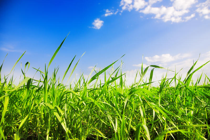 Download Grass and sky stock photo. Image of grass, background - 26501158