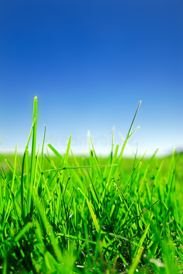 Download Grass and sky stock image. Image of meadow, colour, spring - 5098559
