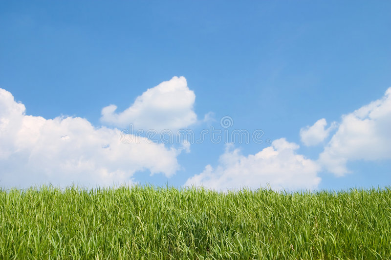 Grass and sky royalty free stock photos