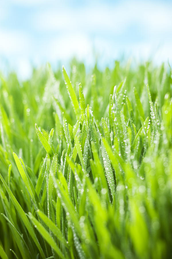 Green Fresh Grass Sky Background Stock Photo