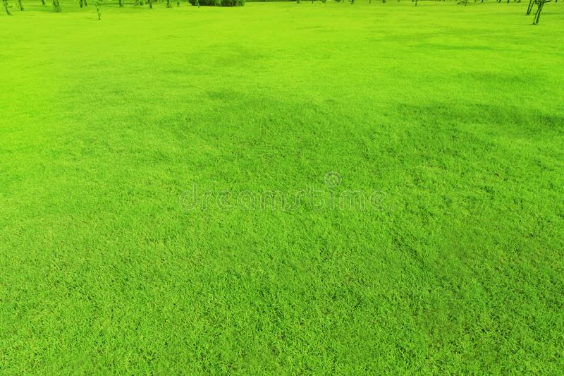 The grass is smooth, beautiful, green courtyard in the garden. Day stock photography
