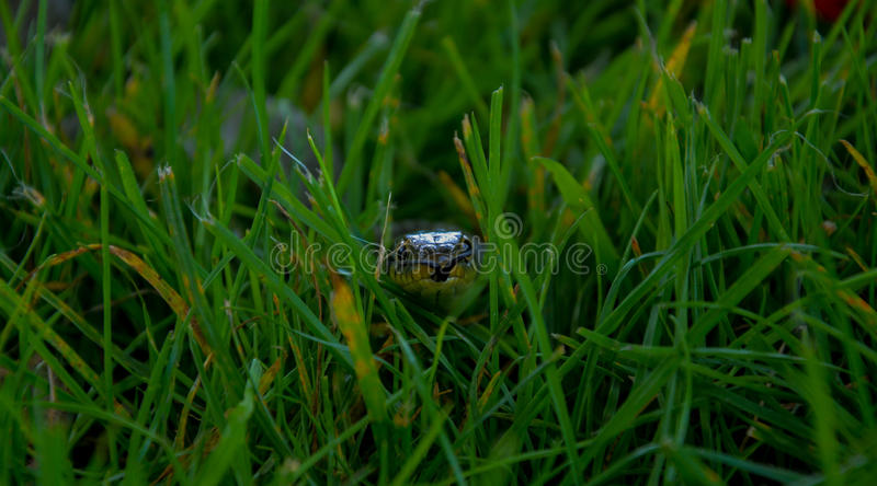 A grass snake. I found this fellow sneaking through the long grass at Petworth House on a sunny September morning. I like this shot because it looks like he is stock photos
