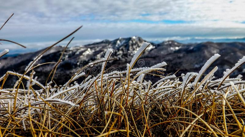 Grass&Snow royalty free stock photography